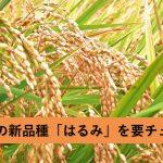 神奈川のブランド米「はるみ」はどんなお米なのか?その特徴や開発ヒストリーを調査!