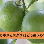 「かぼす」と「すだち」!酸っぱいかんきつ類の違いとは?それぞれの特徴と産地や生産量は?