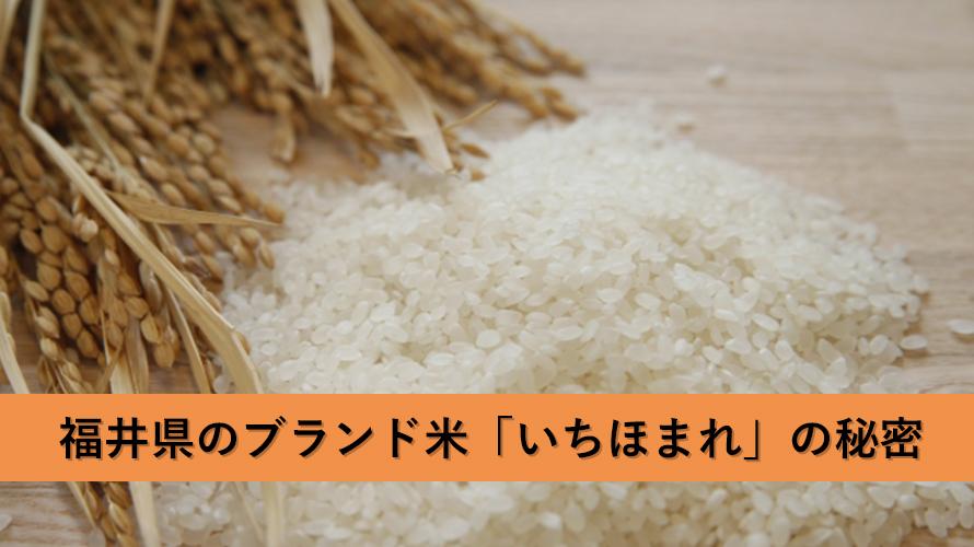いちほまれについて知りたい・買いたい!福井県が今イチ押しブランド米の秘密とは?