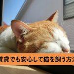 初めての猫のしつけ、賃貸でも安心して暮らすためのしつけ方法