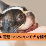 マンションで犬が飼いたい人へ…退出時のトラブルが少ない犬種と犬のしつけ方