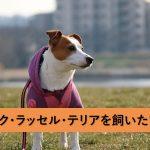 これからジャック・ラッセル・テリアを飼いたい人のための子犬情報