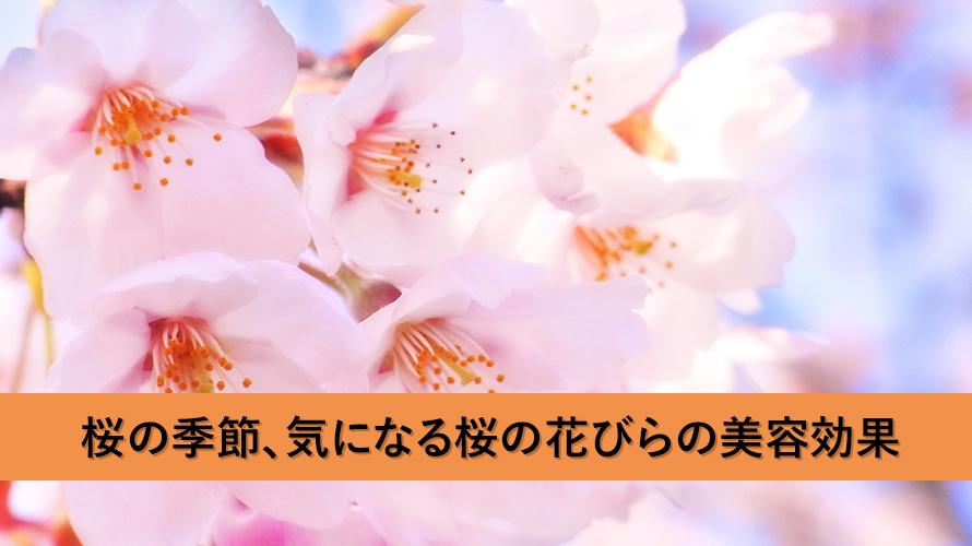桜の季節、気になる桜の花びらの美容効果とは?