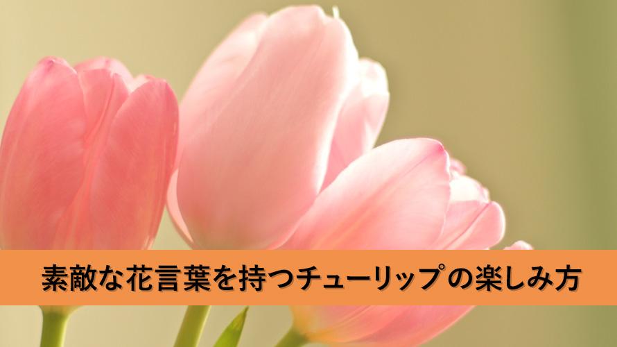 素敵な花言葉を持つチューリップの楽しみ方と育て方