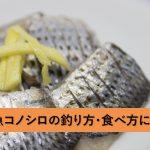 コノシロは出世魚ではない?!名前の由来と釣り方・食べ方について