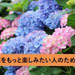 紫陽花をもっと楽しみたい人のための、紫陽花の名所紹介・紫陽花育成方法のコツ